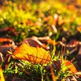 Осенние лист Стоковое Изображение RF