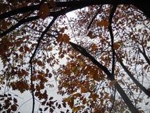 Осенние контрасты Стоковые Изображения RF