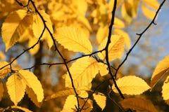 осенние листья Предпосылка природы с красочными деревьями на солнечном дне стоковые фото