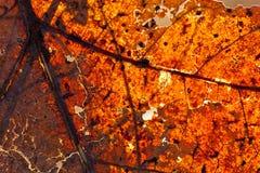осенние листья стоковые изображения rf
