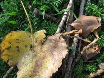осенние листья Стоковые Изображения