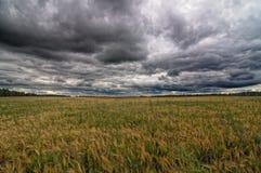Осенние поле и небо Стоковая Фотография RF