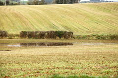 Осенние поля в Co.Cork, Ирландия ландшафта. Стоковое фото RF