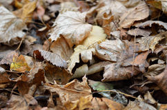 Осенние предпосылки мертвых листьев Стоковая Фотография