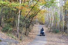 Осенние древесины Стоковые Изображения