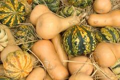 Осенние тыквы Стоковое Изображение RF