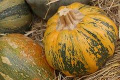 Осенние тыквы Стоковые Изображения RF