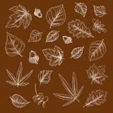Осенние упаденные эскизы мела листьев и жолудей иллюстрация вектора