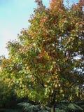 Осенние цвета от зеленой к красному цвету Стоковые Изображения RF