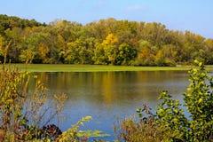 Осенние цветы Стоковое Изображение RF