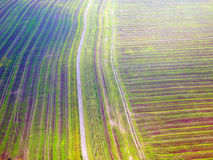 Осенние fileds от взгляд сверху Стоковое Фото