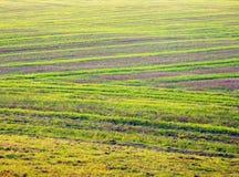 Осенние fileds от взгляд сверху Стоковое фото RF