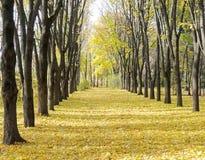Осенний бульвар Стоковые Изображения RF