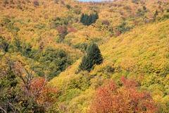 Осенний взгляд лесов в близко в Bormida Стоковые Изображения RF