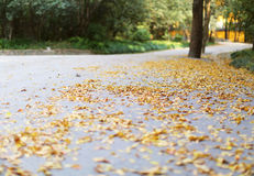 осенний день выходит желтый цвет тоски Стоковое Изображение RF
