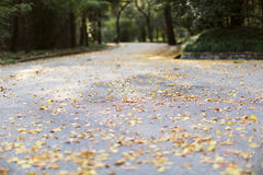 осенний день выходит желтый цвет тоски Стоковая Фотография