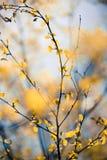 осенний день выходит желтый цвет тоски Стоковое Изображение