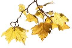 осенний день выходит желтый цвет тоски Стоковое Фото