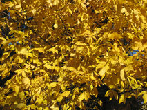 осенний день выходит желтый цвет тоски стоковое фото rf