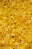 осенний день выходит желтый цвет тоски стоковая фотография rf