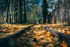 Осенний изгибая след стоковая фотография rf