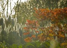 Осенний клен Стоковые Изображения