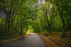 Осенний ландшафт зоны Kakheti Стоковое Фото