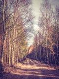 Осенний лес в солнечности стоковая фотография