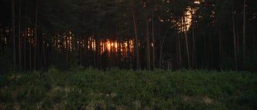 Осенний лес после захода солнца в зоне kraj чеха Machuv 13-ого октября 2018 стоковое фото