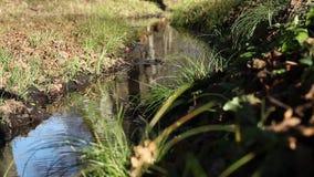 Осенний малый поток воды сток-видео