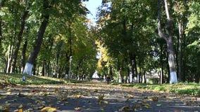 Осенний парк с путем прогулки и большими деревьями видеоматериал