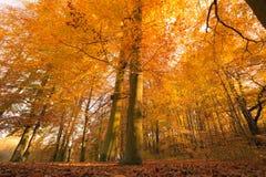 Осенний пейзаж в лесе Стоковые Изображения
