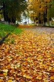 Осенний пейзаж в парке города Стоковая Фотография