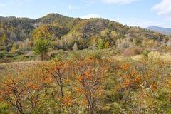 Осенний пейзаж горы Стоковая Фотография RF
