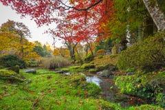 Осенний пейзаж национального парка Nikko Стоковое Изображение RF