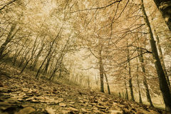 Осенний пейзаж парка Стоковое Фото