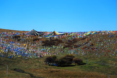 Осенний пейзаж плато Цинхая - Тибета Стоковое Фото