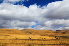 Осенний пейзаж плато Цинхая - Тибета Стоковое Изображение