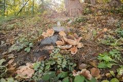 Осенний underbrush в Bormida, Савоне, Лигурии Стоковое Изображение
