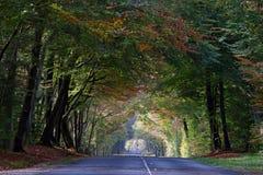 Осенняя дорога леса Стоковое Фото