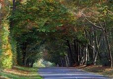 Осенняя дорога леса Стоковые Фото