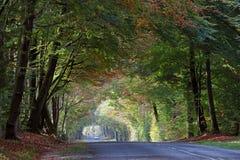 Осенняя дорога леса Стоковые Изображения RF