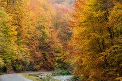 осенняя дорога стоковое изображение rf