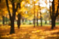 Осенняя предпосылка парка стоковые фотографии rf