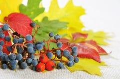 Осенняя предпосылка Стоковые Изображения RF