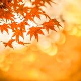 Осенняя предпосылка, немножко defocused красное marple выходит Стоковая Фотография