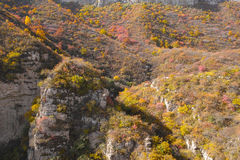 Осенняя пуща горы Стоковая Фотография RF