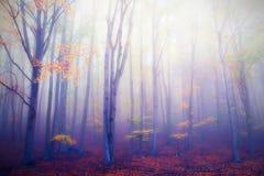 Осенняя пуща стоковая фотография