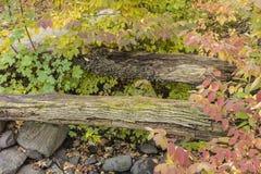 осенняя пуща Стоковая Фотография RF