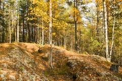 осенняя пуща стоковое фото rf